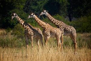 African Safari Travel